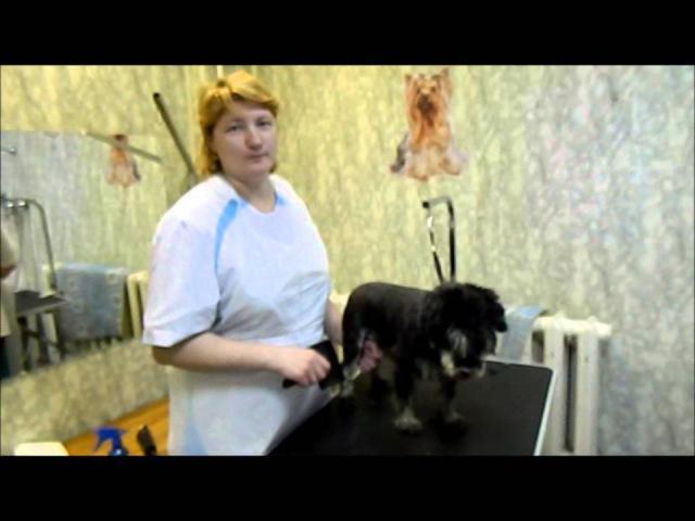 Груминг салон ветклиника Бемби