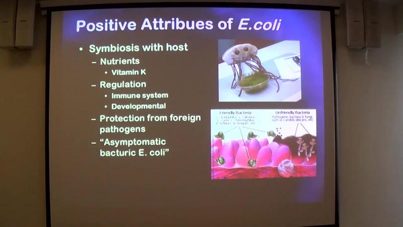Антимикробная резистентность у животных