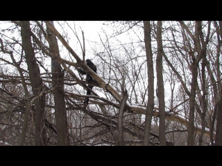 Кролик Блэк лазеет на дереве