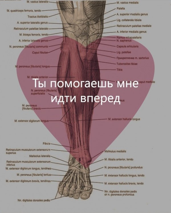 https://pp.userapi.com/c636528/v636528524/49fdf/AEfOG9jWusk.jpg