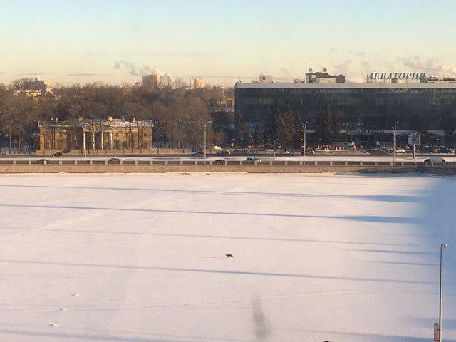У Кантемировского моста на льду бегала собака