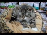 Кошка Матрёшка ищет дом