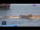 Динозавр Саркозух всплыл в Персидском заливе The corpse of a dinosaur surfaced