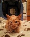 Никто не думал, что этот рыжий котенок переживет первую ночь. Но он не только сделал это…