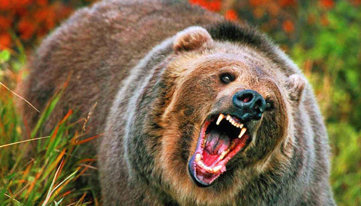 В Сунтарском улусе медведь задрал геолога