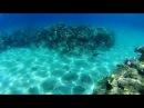Подводный мир, красное море