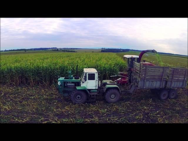 Уборка кукурузы на силос | Corn Silage