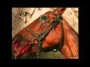 Идеальная лошадь - это Свободная лошадь.
