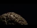 Мозг с д-ром Дэвидом Иглменом (5) Почему мы нужны друг другу