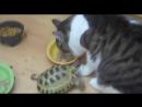 Черепашка ниндзя