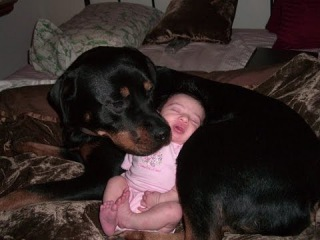 Ultimate Cutest Rottweiler Dogs and Babies Play Together Videos Compilation