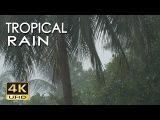 4K Tropical Rain &amp Relaxing Nature Sounds - Ultra HD Nature Video - Sleep Relax Study Meditate
