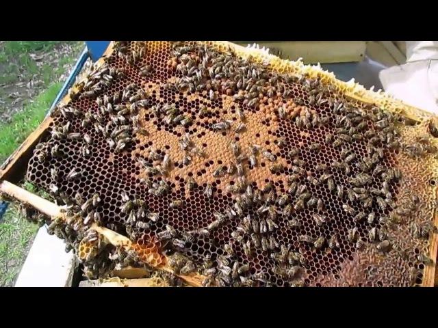 Пчеловодство.Апрель. Весенний осмотр пчелиной семьи. Расширение гнезда