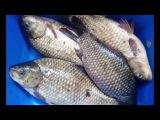 Рыбалка. Ловля рыбы на снасть Убийца карася
