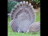 Most Beautiful Birds in the World  Amazing Birds