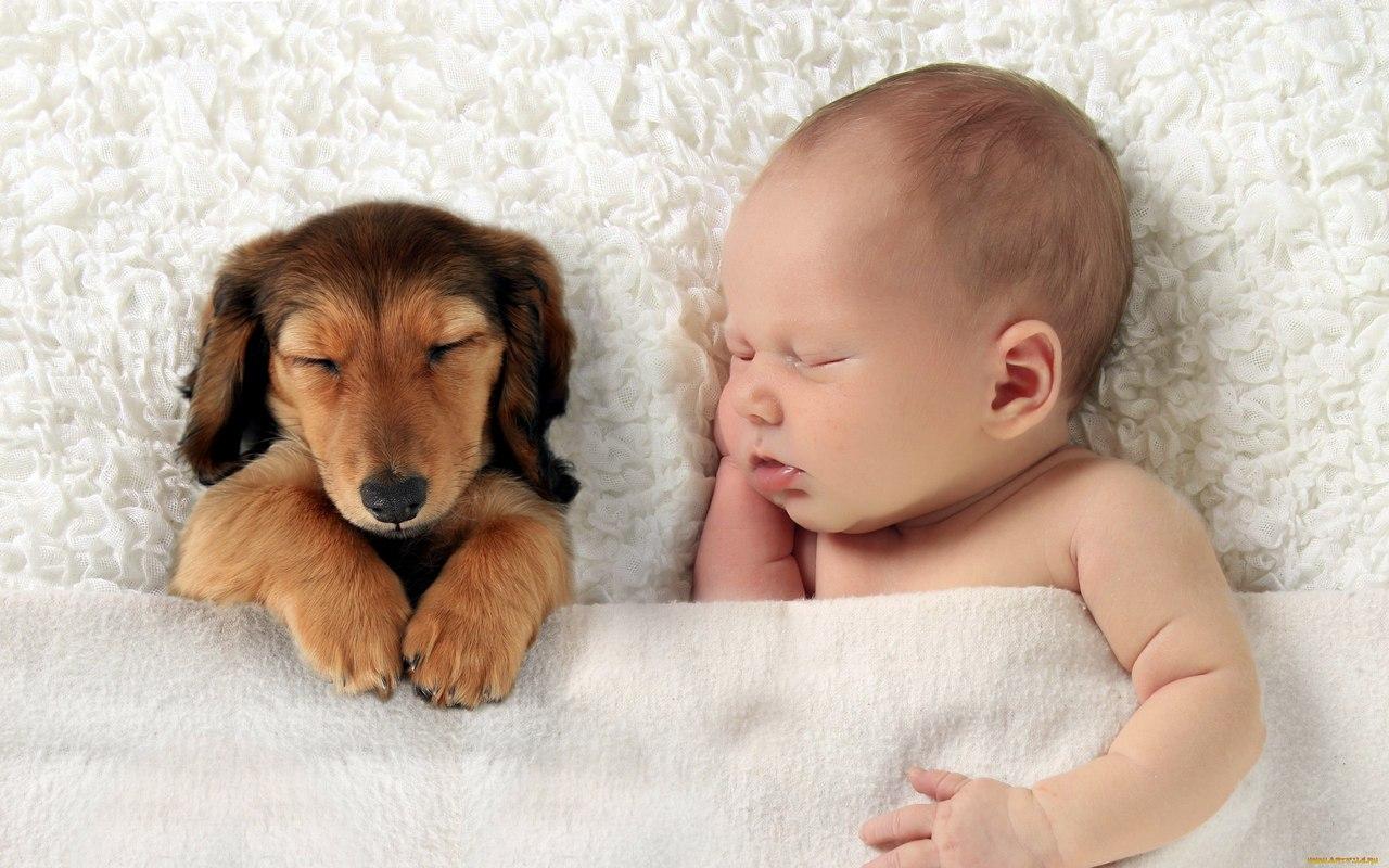 Домашние животные и недоношенные дети