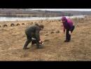 Продается девочка щенок лабрадора ретривера. Первая натаска))