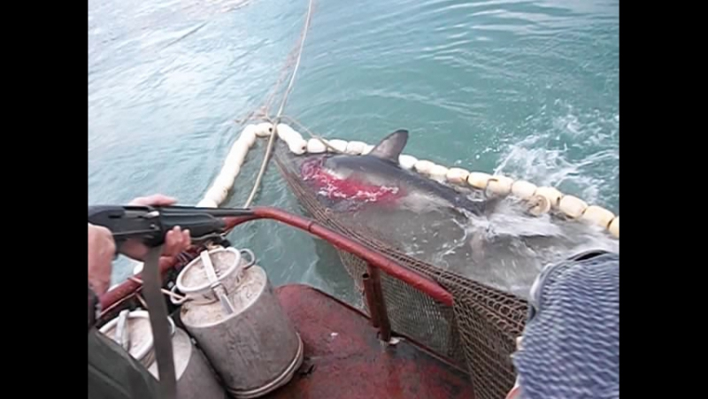 акула, последние 10 сек жизни)