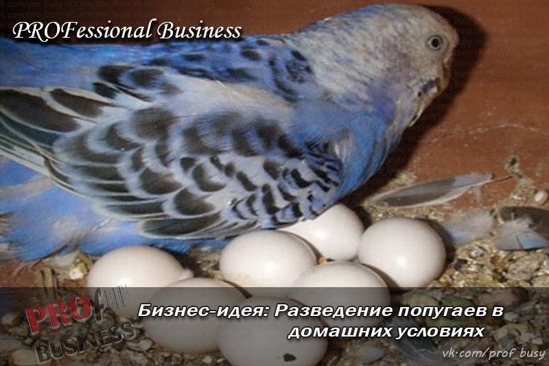Попугаи жако разведение домашних условиях
