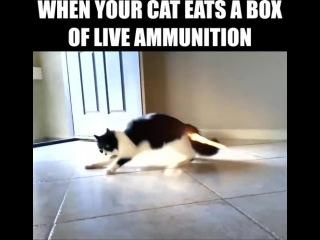 When your cat eats a box of live ammunition