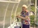 Выращивание помидоров без полива.(Приятного просмотра) Помидоры без полива.