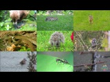 The Forest Animals for Kids pronunciation in English (with videos)