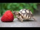 Черепахи Милые и Веселые Черепашки Видео Сборник NEW HD