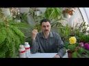 О препаратах био-чудо-стимуляторах для растений