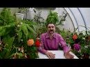 О главном стимуляторе цветения для тропических растений, в частности сенполий фиалок