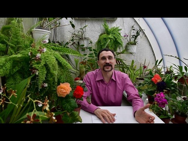О главном стимуляторе цветения для тропических растений, в частности сенполий (фиалок)