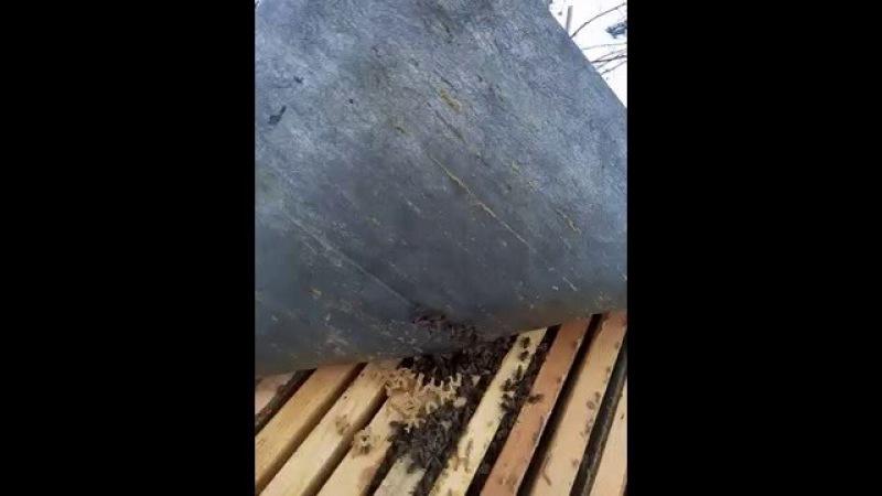 ▶️Пчелы зимой на улице. 🌨️ Отличная зимовка пчел под поролоном 👈🤘🤗