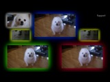 Gabe the Dog - What is Dog (Haddaway)