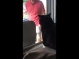 Смешная истеричная реакция кота, увидевшего, как его хозяин ведет домой собаку