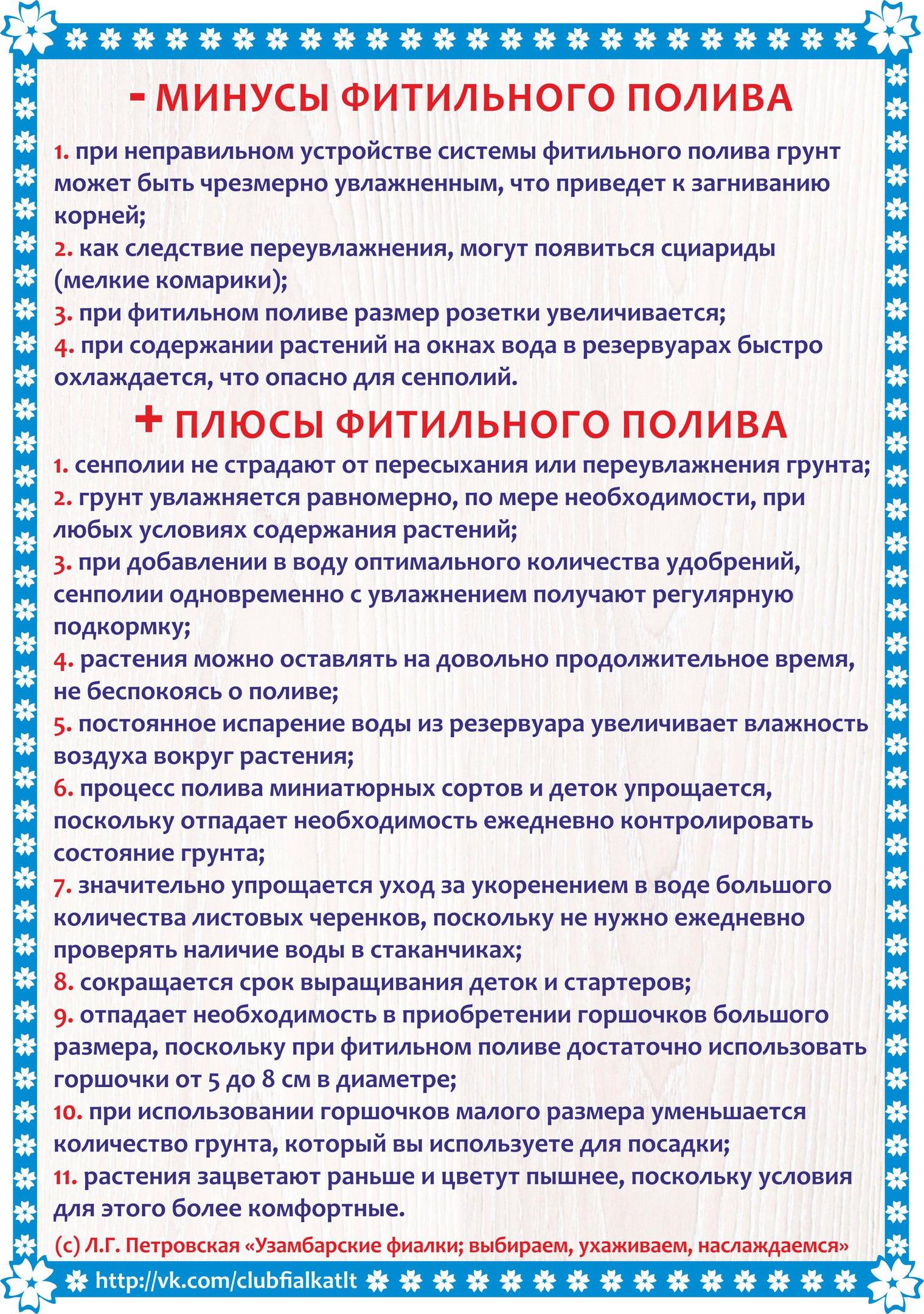 узамбарская фиалка или сенполия - Страница 2 ULY85CcEsSw