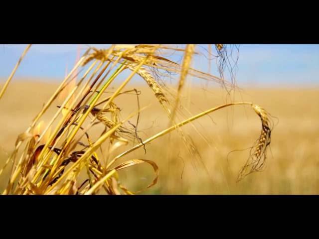 Збережемо врожай від вогню (соц реклама)