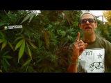 Rocker-T - Tru Ganjaman Official Video