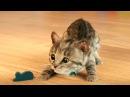 Мультик про котят Маленький МИЛЫЙ КОТЕНОК Мой любимый кот КОТИКИ Видео Игра как ...