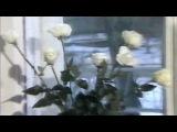 Юра Шатунов - Белые розы