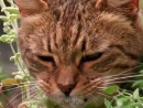 Да что вы знаете о кошачьей наркомании!