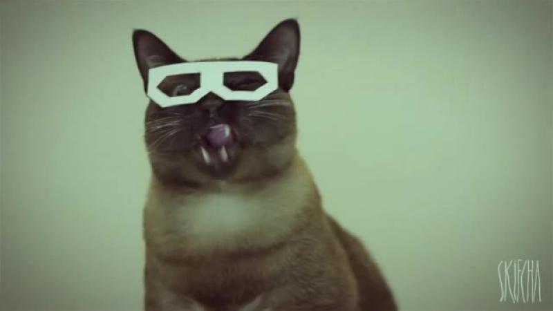 Dubsteb cat