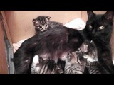 Kitty Cate Talks To Her Kittens