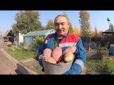 Посадка картофеля  Способ посадки картофеля для получения  высокого урожая  От А...