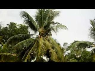 Обезьяны в дикой природе. Шри-Ланка