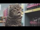 Коты в супермаркетереклама / Cat supermarket