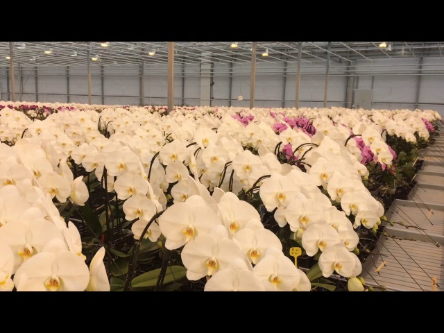 A view from behind the scenes at Opti-flor location Creations