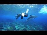 Океан.Дельфины плавают под музыку.he ocean, dolphins swim to the music