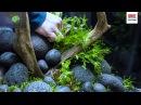 Juwel Aquarium Lido 120 Aquascaping Tutorial
