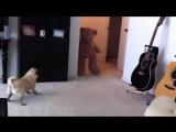 Смешное видео с мопсом. Испуганная собака. Funny video with pug. The frightened dog