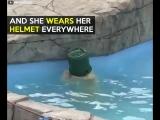 Polar bear cub loves her life