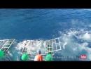 Акула сломала клетку с находившимся в ней дайвером